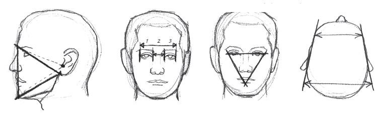 Пропорции головы 2