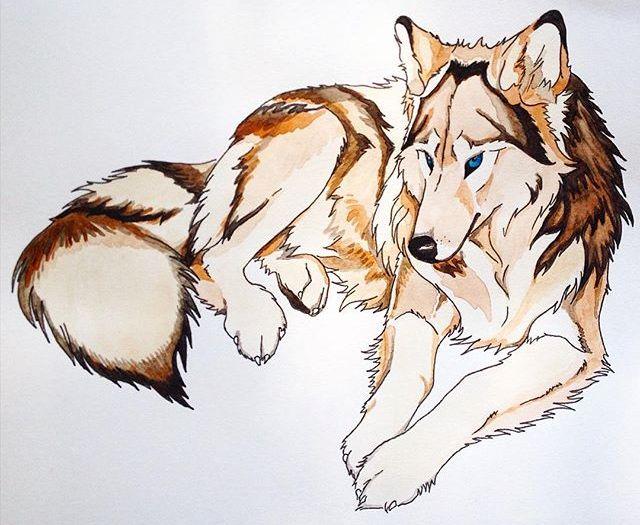 Волк_инст
