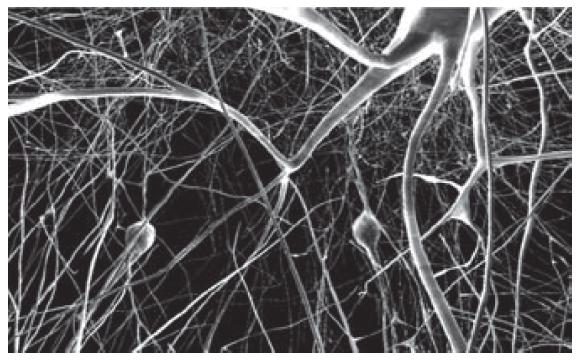 Снимок мозга с высоким разрешением, — иллюстрация из книги.