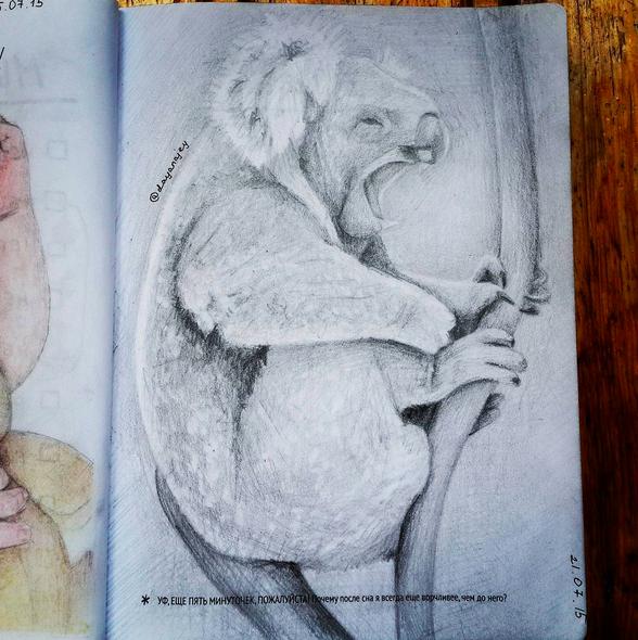 Очень милая коала, нарисованная в рамках творческого челленджа МИФ. Автор — снова dayanajey источник