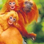 Что делать, чтобы обезьяна была к вам все время лицом? Готовимся к 2016 году