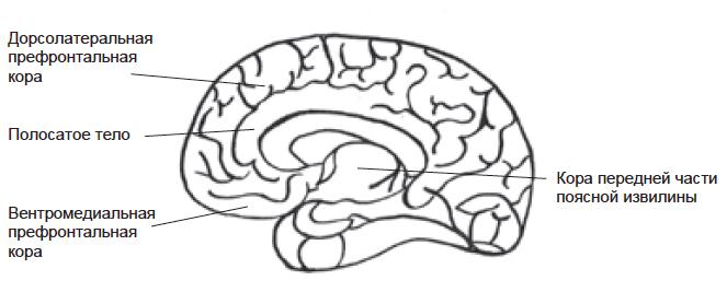Мозг и мудрость