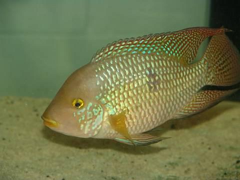В мире все взаимосвязано, как чешуйки на теле рыбы.