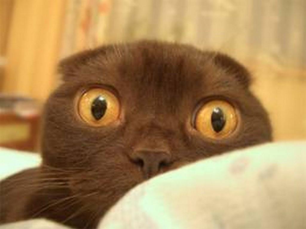 Воооот такие глаза у нервных людей (и котов), - источник.