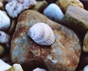 shell-1118507_1920
