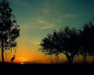 sunset-1636109_1920