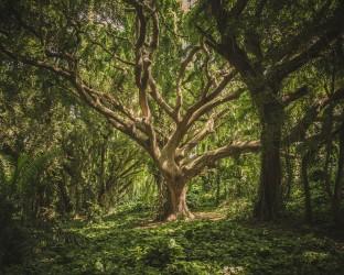 tree-1209774_1920