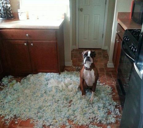 Собака устроила беспорядок
