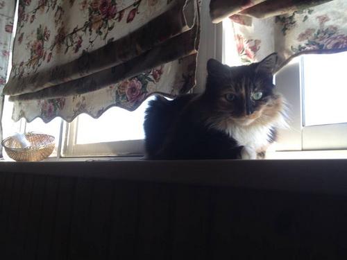 Иногда Гусеница бывает и спокойной кошкой — надо же дать хозяйке поработать!