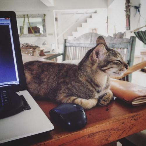 кошка Дурында