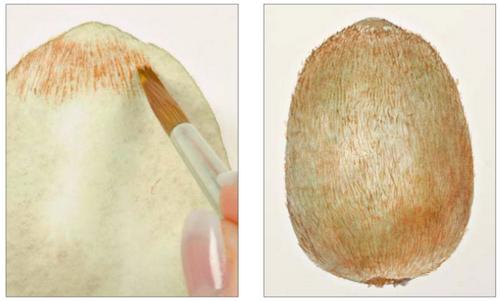 Киви в технике сухой кисти. — Иллюстрация из книги «Портреты фруктов и овощей»