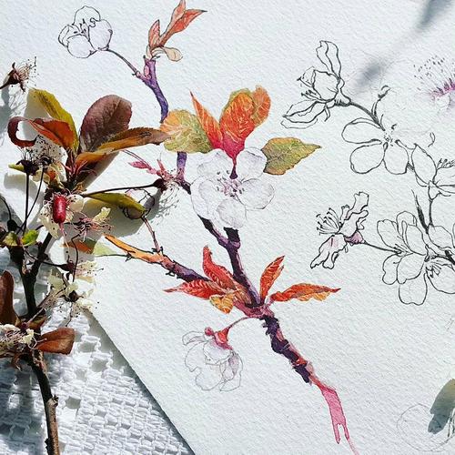 Вы получаете двойную пользу от рисования растений — сначала вы медитируете, рассматривая его, а потом получаете истинное удовольствие от рисования. Разве не чудесно? — @miftvorchestvo