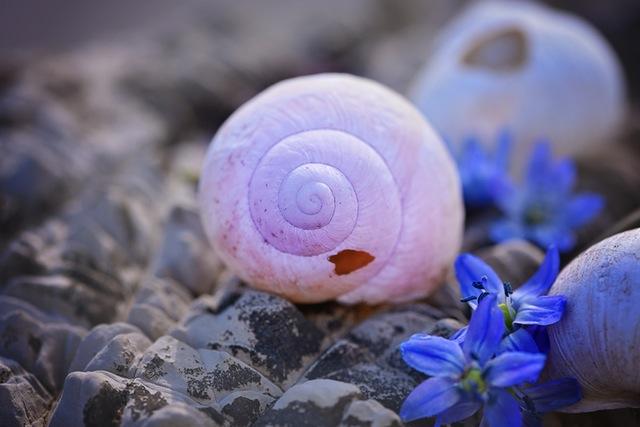 shell-empty-empty-snail-shell-broken