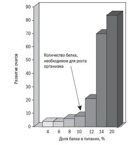 Развитие очагов рака под влиянием белков в питании. Иллюстрация из книги «Китайское исследование»