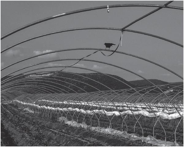 Увидеть перспективу в картофельном поле
