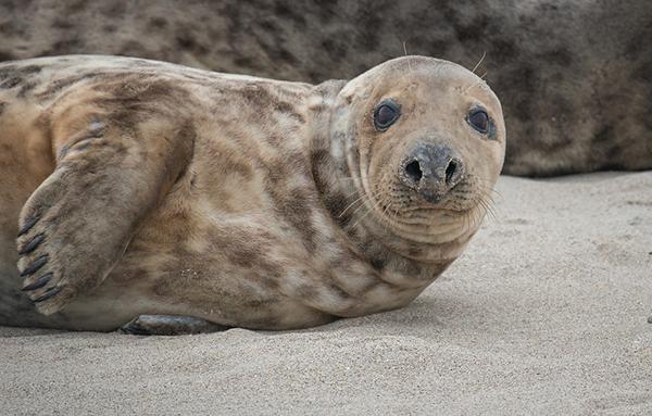 Участники эксперимента не вспомнили, что индейцы охотились на тюленей, так как это было непривычно для них