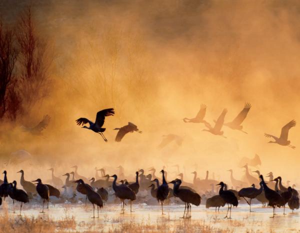 Изображение может производить разное впечатление в зависимости от того, какую гамму цвета вы выберете: теплую или холодную.