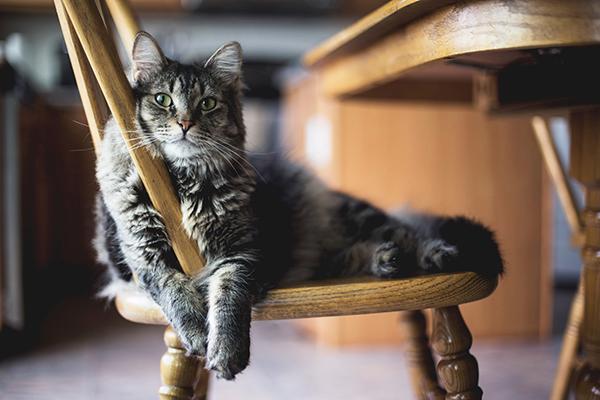 Бывает полезно поговорить и с собственным котом. Что бы он вам посоветовал?