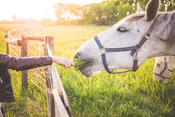 Если нет времени учиться верховой езде, заедьте на конюшню покормить лошадок