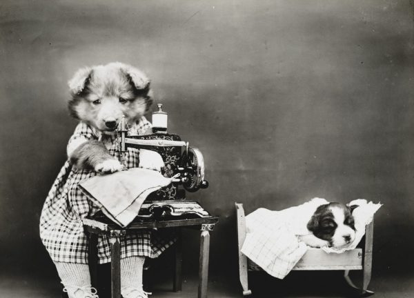 Пес, который шьет платье.
