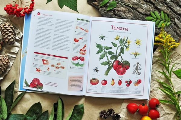 Книга-клад, сокровище против ссадин и шоколад на дереве