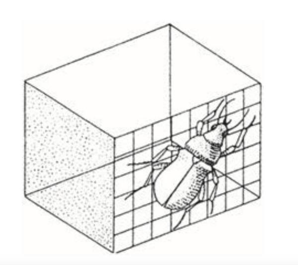 Посмотрите на жука. Как посадить его внутрь коробки? На первый взгляд, кажется, что это невозможно. Не спешите, подумайте над ответом хотя бы одну-две минуты.