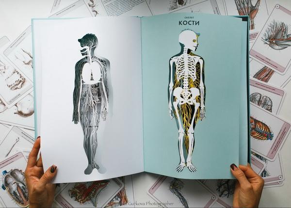 Перевернули резную страничку — а там человек. С одной стороны показана его дыхательная система, с другой — скелет. Доступно, понятно и можно потрогать руками.