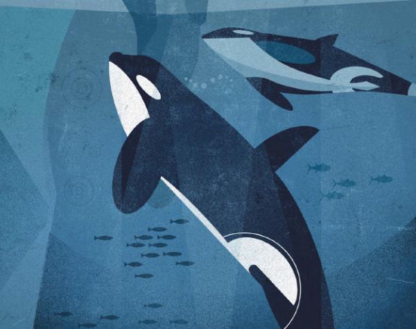 Синий кит не просто самый большой обитатель нашей планеты, но и крупнейшее животное из всех когда-либо существовавших на Земле.