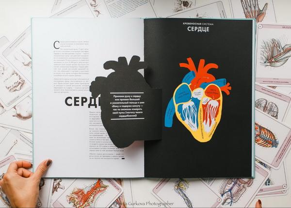 Как читать «Анатомию»