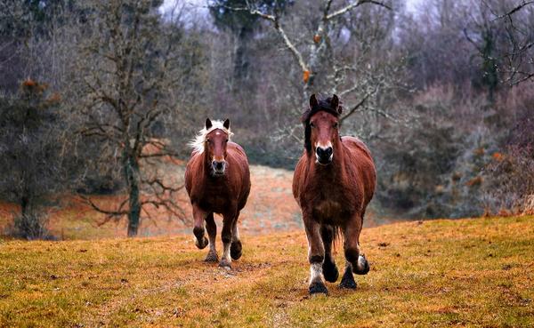 Такое состояние более двух тысяч лет назад описал Платон. Представьте себе колесницу, в которую впряжены две лошади с очень разными характерами. Одна лошадь — это страсти, инстинкты и внутренние порывы, а другая — разум, рациональное и моральное начала. Эти две лошади постоянно тянут нас в разные стороны. А наша задача — управлять обеими так, чтобы финишировать в нужном нам месте.