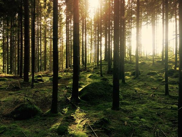 Дело было в том, что изменилась экология леса и деревья стали чаще заболевать. Из-за отсутствия гнили и мертвых бревен почва стала скуднеть и уплотняться. Исчезло многообразие животного мира. Высокоорганизованная и простая система привела к краху.