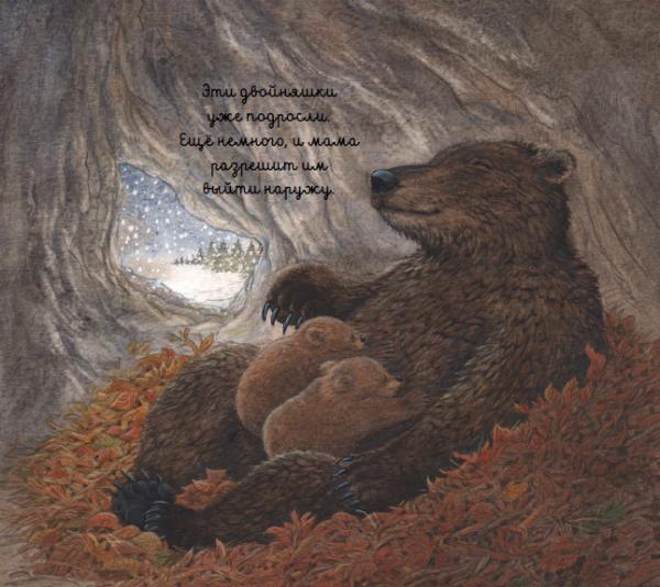 Только что родившийся медвежонок совсем крошечный, слепой и беспомощный.