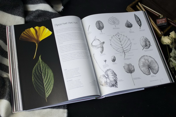 Когда изучаешь или рисуешь растение, нужно в первую очередь обратить внимание на листья. Листья бывают разных цветов, размеров и форм, в зависимости от вида и условий среды