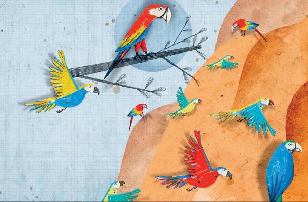 Ара образуют пару на всю жизнь, причём партнёры не только вместе выводят птенцов, но также делят пищу и ухаживают друг за другом.