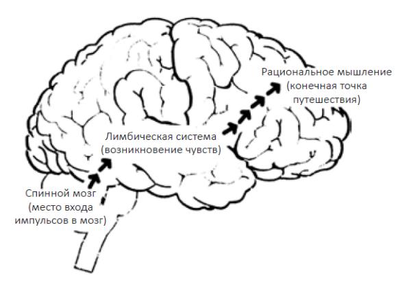 Перед тем как в действие вступает разум, мы оцениваем происходящее с эмоциональной точки зрения.