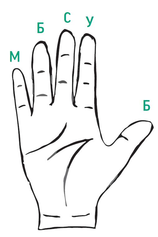 Рассматриваем руки