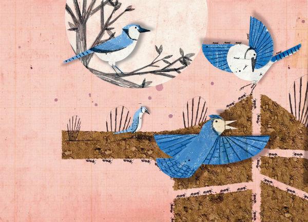 Удивительно, но некоторым птицам очень нравится принимать «муравьиные ванны»!