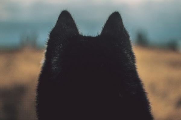 Жить «по-волчьи» оказалось прекрасно.