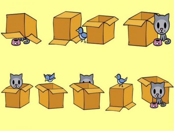 Котик и птица показывают предлоги