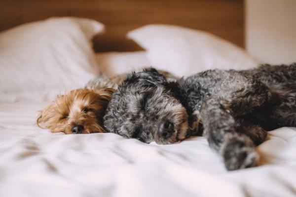 Страдая от недостатка сна, мы становимся раздражительными и чувствуем себя разбитыми, нам трудно сосредоточиться