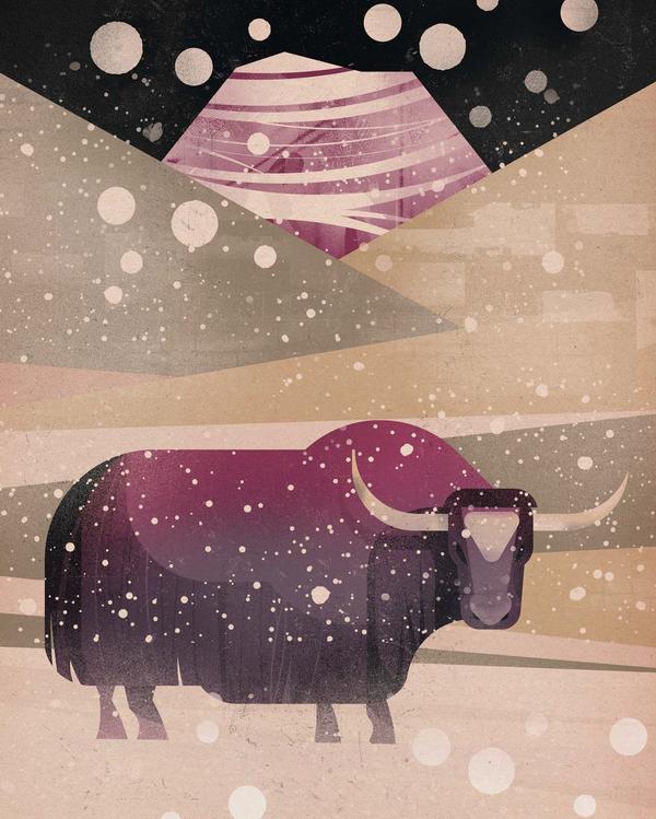 Занимательные факты о животных Северного полушария