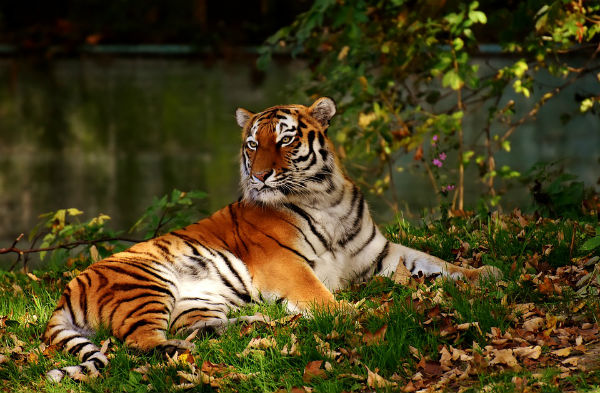У диких животных чуткий сон, такая особенность работы мозга оберегает их от опасности