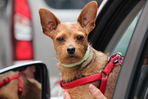 Такси для домашних животных