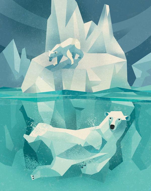 Латинское название Ursus maritimus («медведь морской»): может за час проплыть около пяти километров.