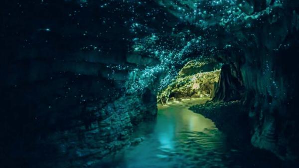 Тур по пещерам завершается безмолвным скольжением под темными сводами, освещенными мириадами голубоватых звезд. По крайней мере, так кажется. Точки света на потолке — биолюминесцентные личинки грибных комариков