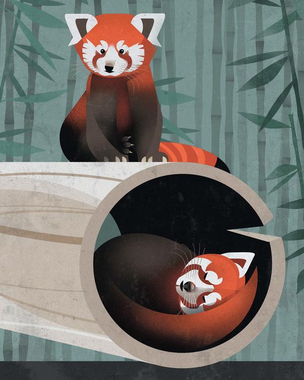 Самые близкие невымершие родственники малой панды — скунсы и еноты, а не большие панды.