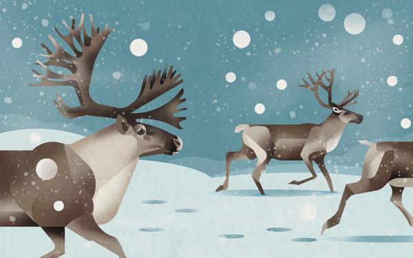 Северный олень — единственный вид оленей, у которого рога есть и у самца, и у самки.