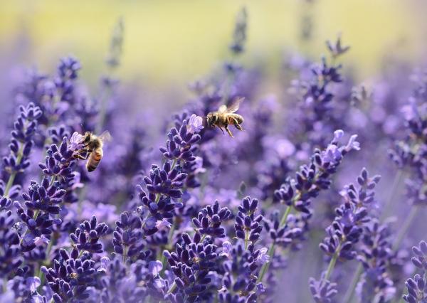 Станьте жужжащей рабочей пчелой, вылетевшей из улья на заре и целый день перелетающей с лютика на ромашку