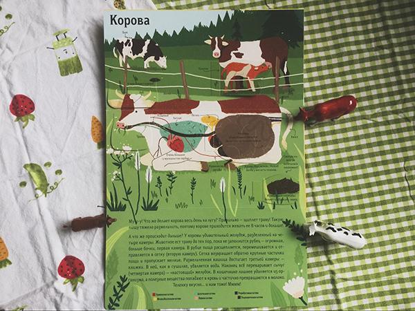 Корова, курица, ёж — в книге рассказывают про животных, которые знакомы даже самым маленьким
