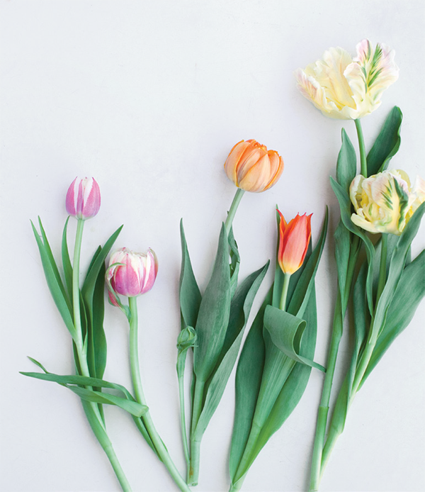 Если вы оставите тюльпанам достаточно пространства для роста и цветения, за ними будет интересно наблюдать.